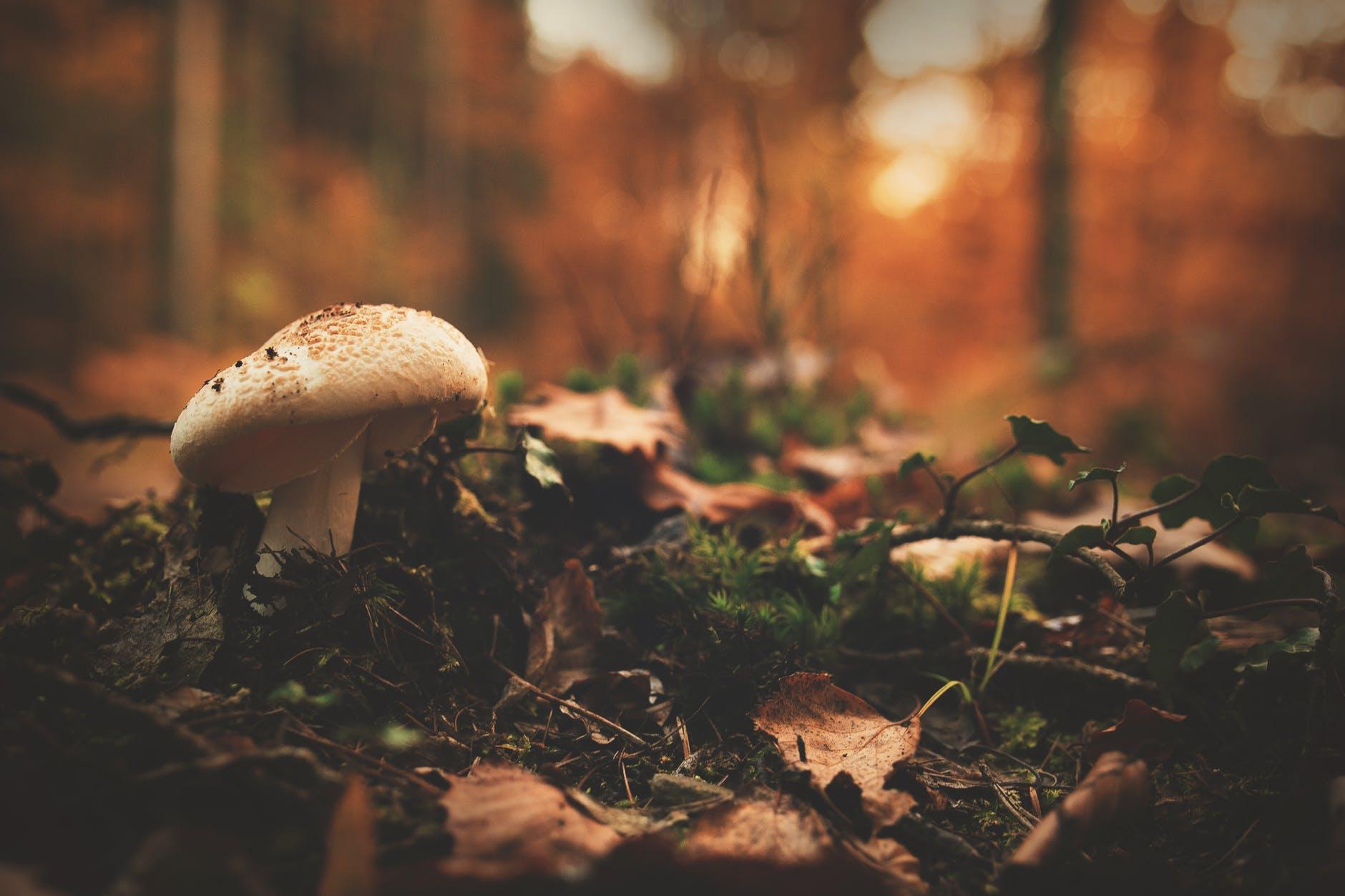 autumn blur boletus close up